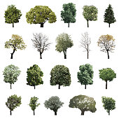 vector collection of high detailed isolated trees
