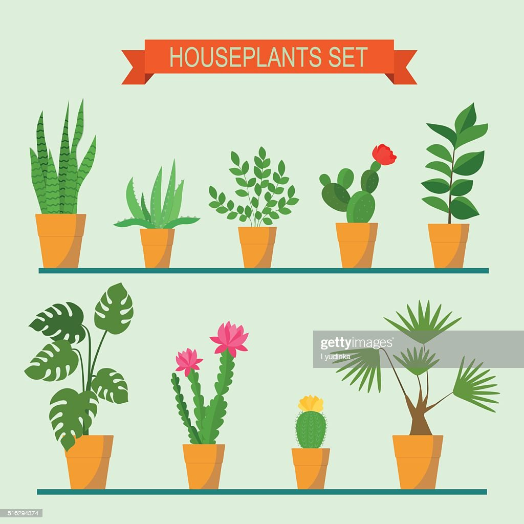 Vector collection of houseplants and flowers in pots. Vector flat illustration
