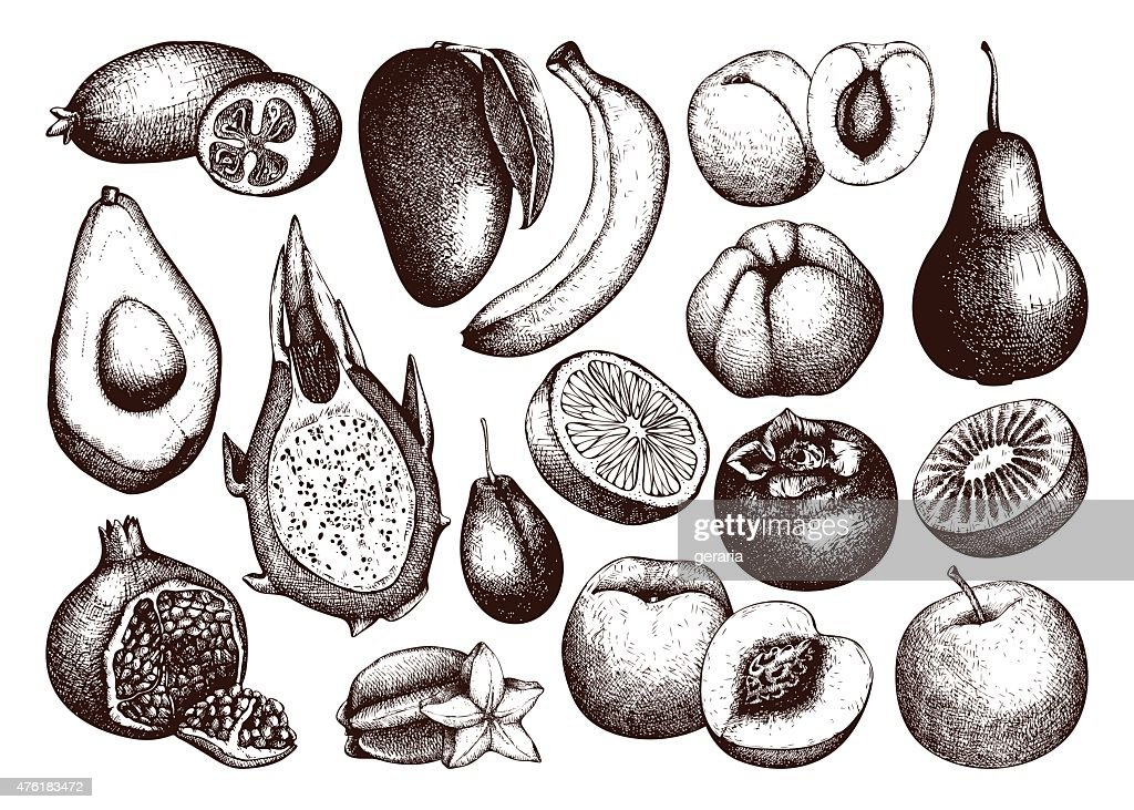 Vector collection of ink hand drawn exotic and garden fruits