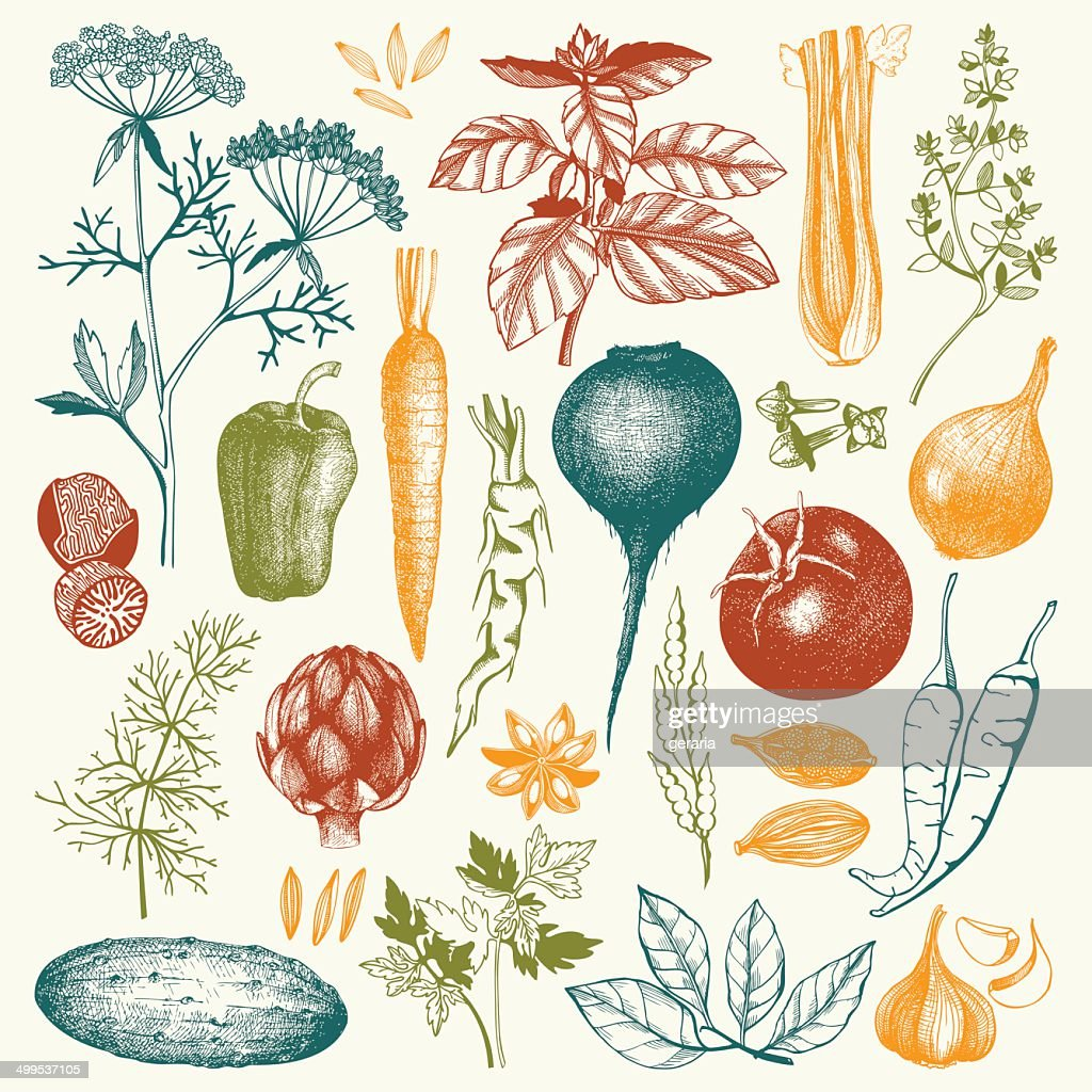 Vector collection of ink hand drawn vegetables,