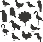 Vector Collection of nature black bird wildlife animal silhouettes