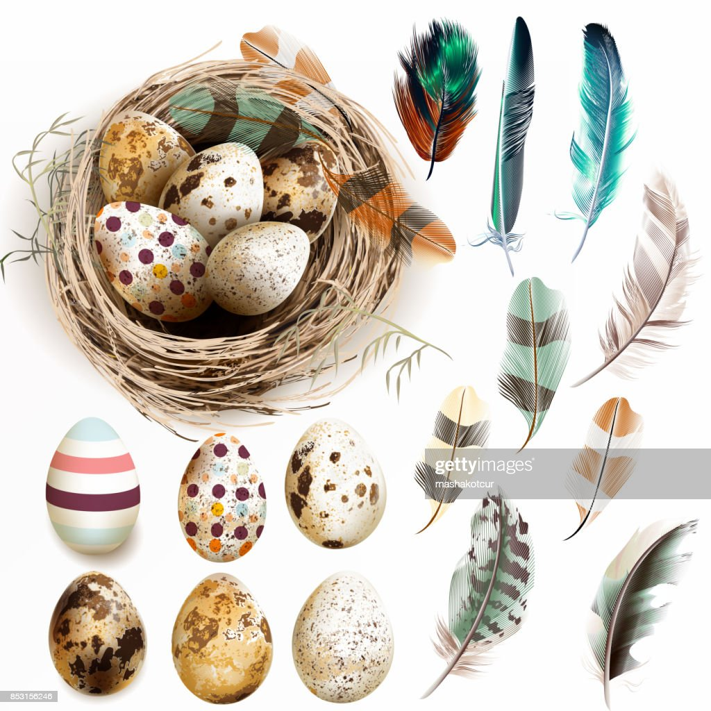Vector collection with Easter eggs bird nest feathers in vintage style