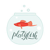 Vector colored illustration of fish in aquarium with fish name lettering.