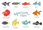 Vector  colored set of  aquarium fish isolated on white background.
