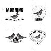 Vector colorful logo set with desert Crested lark bird