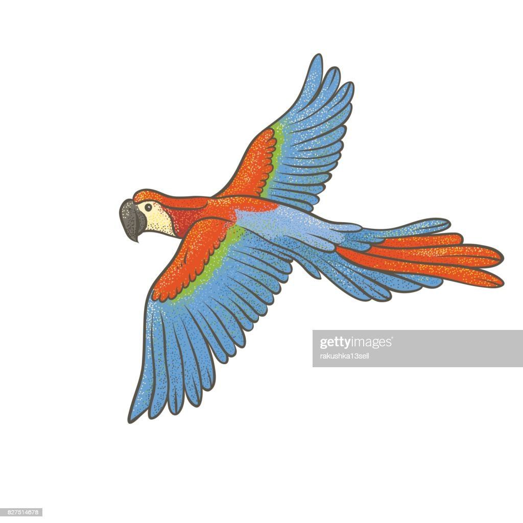Vector colorful textured sketch drawn by hand of parrot on a white background. Bright exotic tropical flying bird macaw. Isolated vivid art outline illustration.
