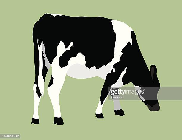 vector cow on pastel green background - cow stock illustrations