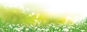 Vector  daisy  flowers field.