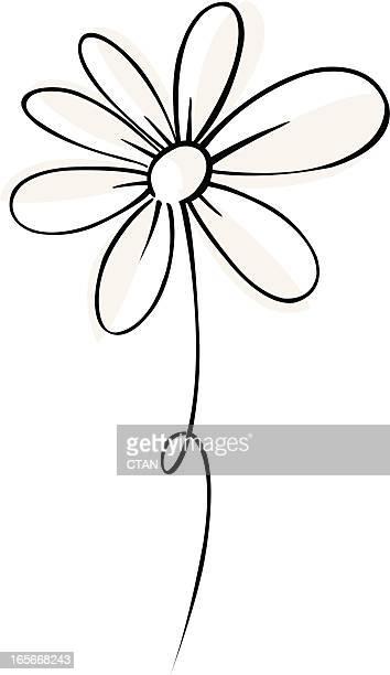 vector daisy - daisy stock illustrations