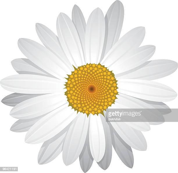 vector daisy with moveable petals - daisy stock illustrations