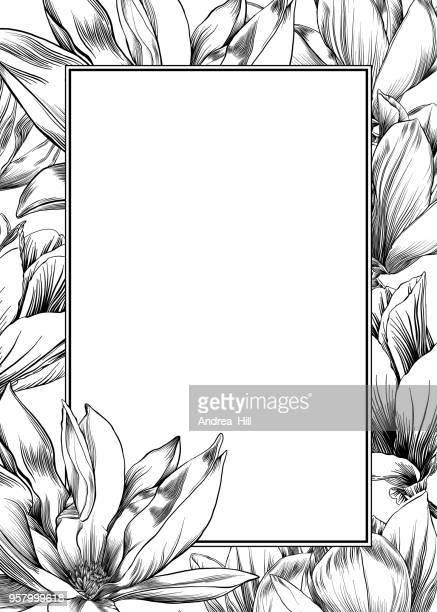 ニシキモクレンのベクターイラストとグラフィック素材 getty images