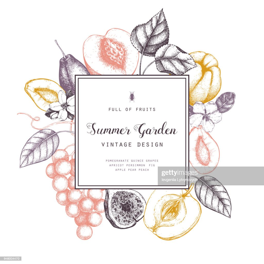 Vector design with garden fruits illustrations