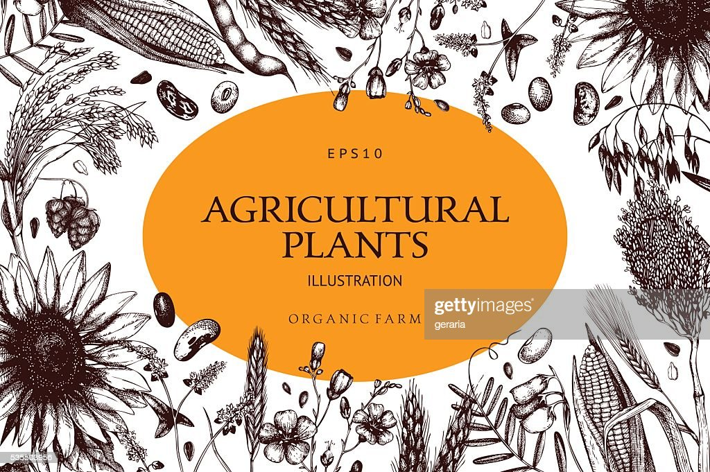 Vector design with ink hand drawn agricultural plants sketches.