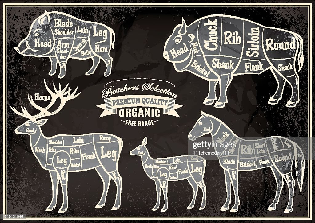 vector diagram cut carcasses boar, bison, deer, horse