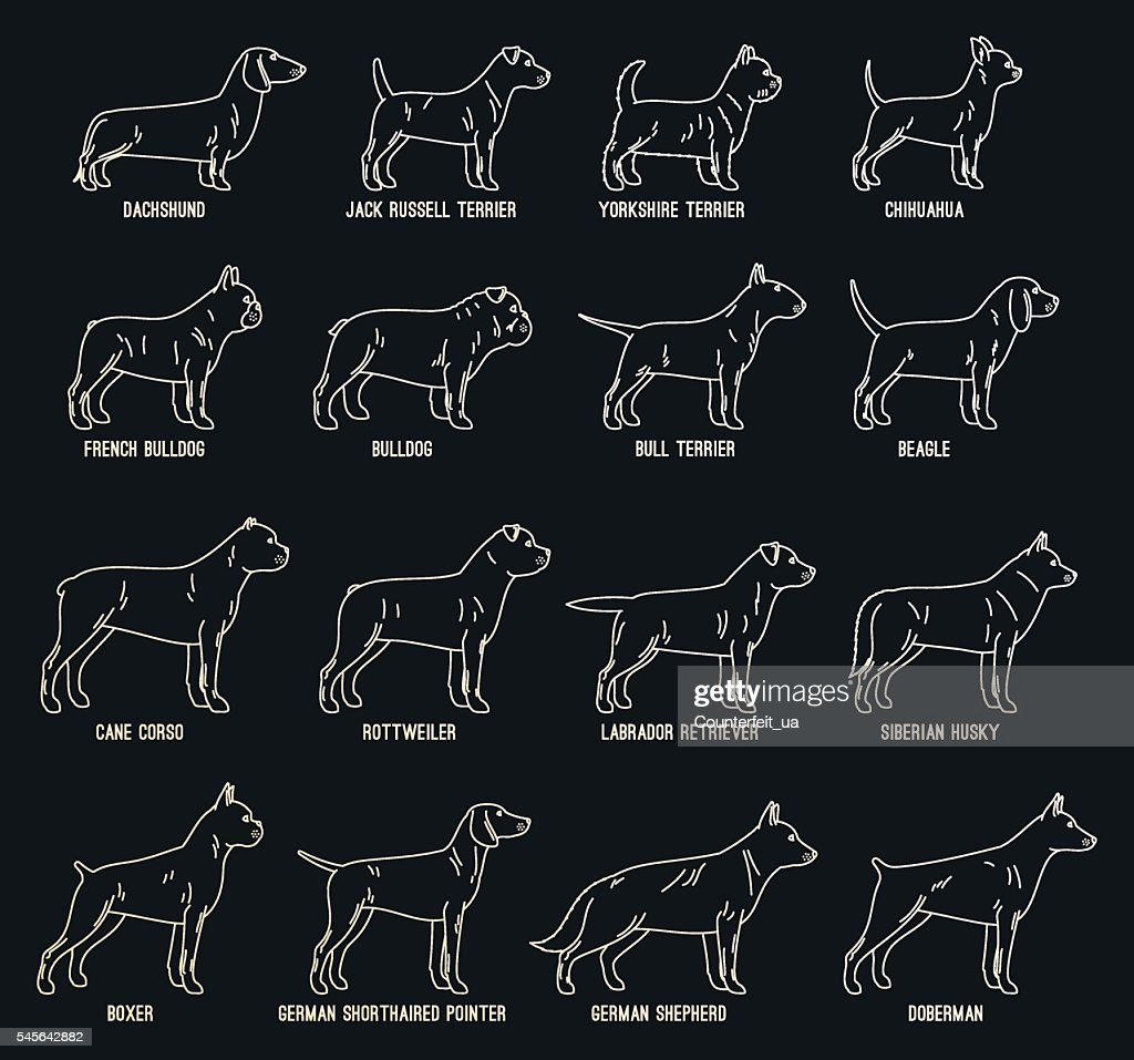 Vector dog thin line icons collection with dog breed names