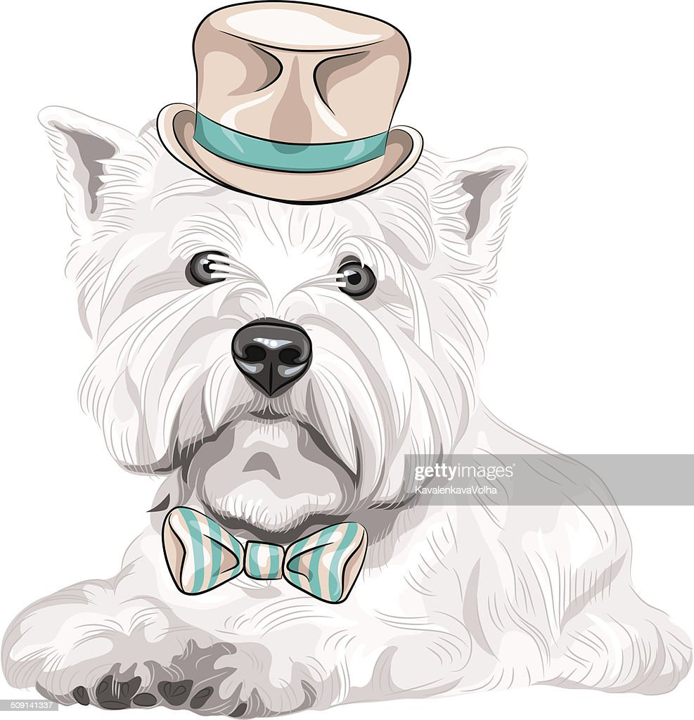 vector dog West Highland White Terrier breed