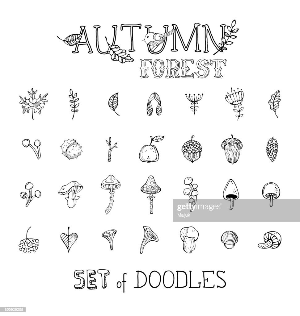 Vector doodles set of autumn forest plants and seeds.
