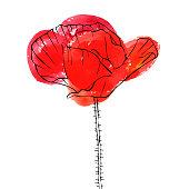 vector drawing flower of poppy