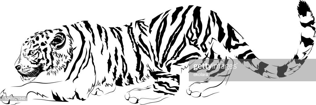 vector drawings black and white predator tiger designe for tattoo symbol