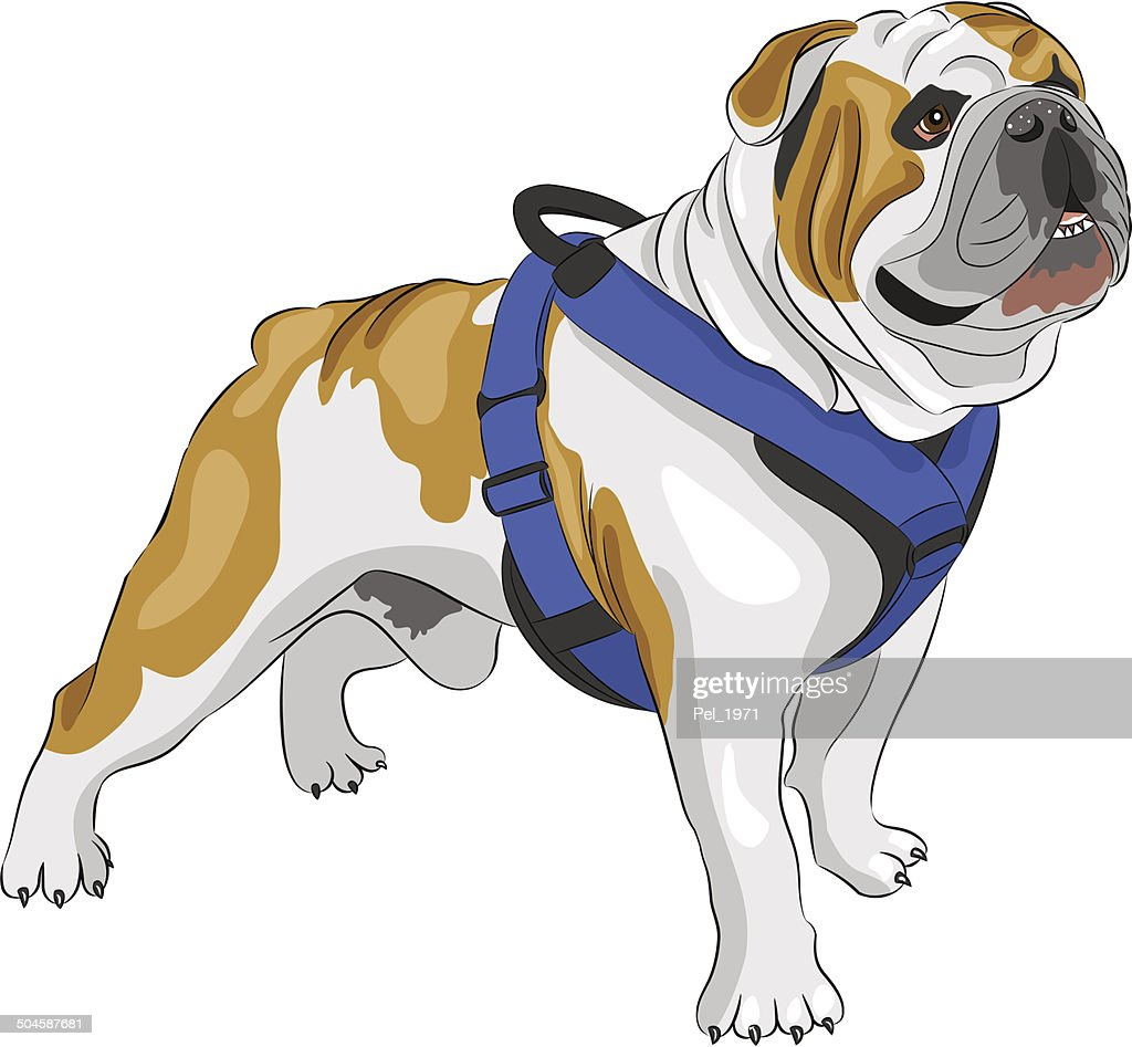 vector  English Bulldog