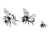 Vector engraving antique illustration of honey flying bees