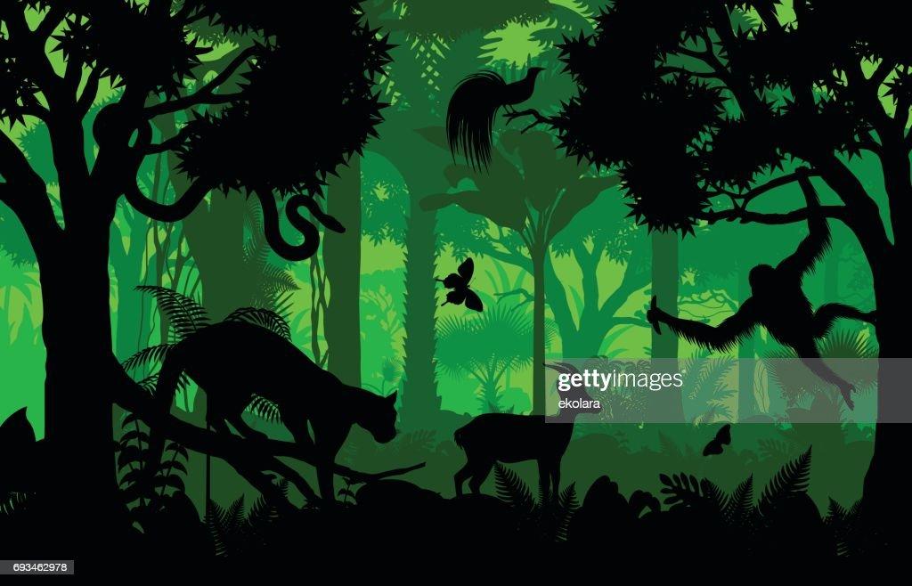 Vector evening indonesian tropical rainforest Jungle background with clouded leopard, gazelle, python, paradise bird and orangutan