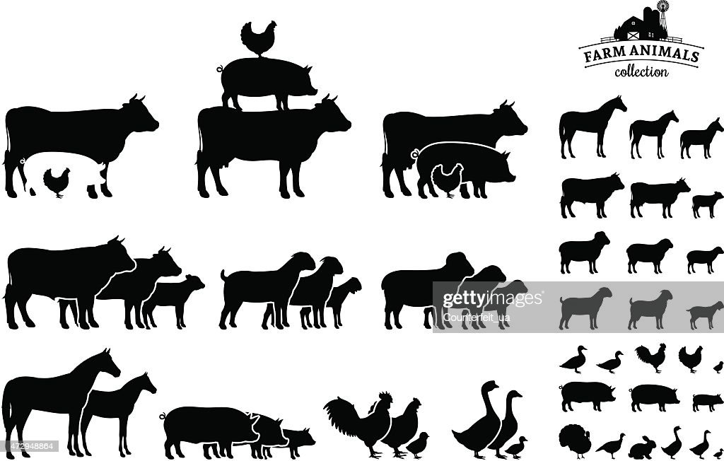 Vector Farm Animals Collection Isolated on White