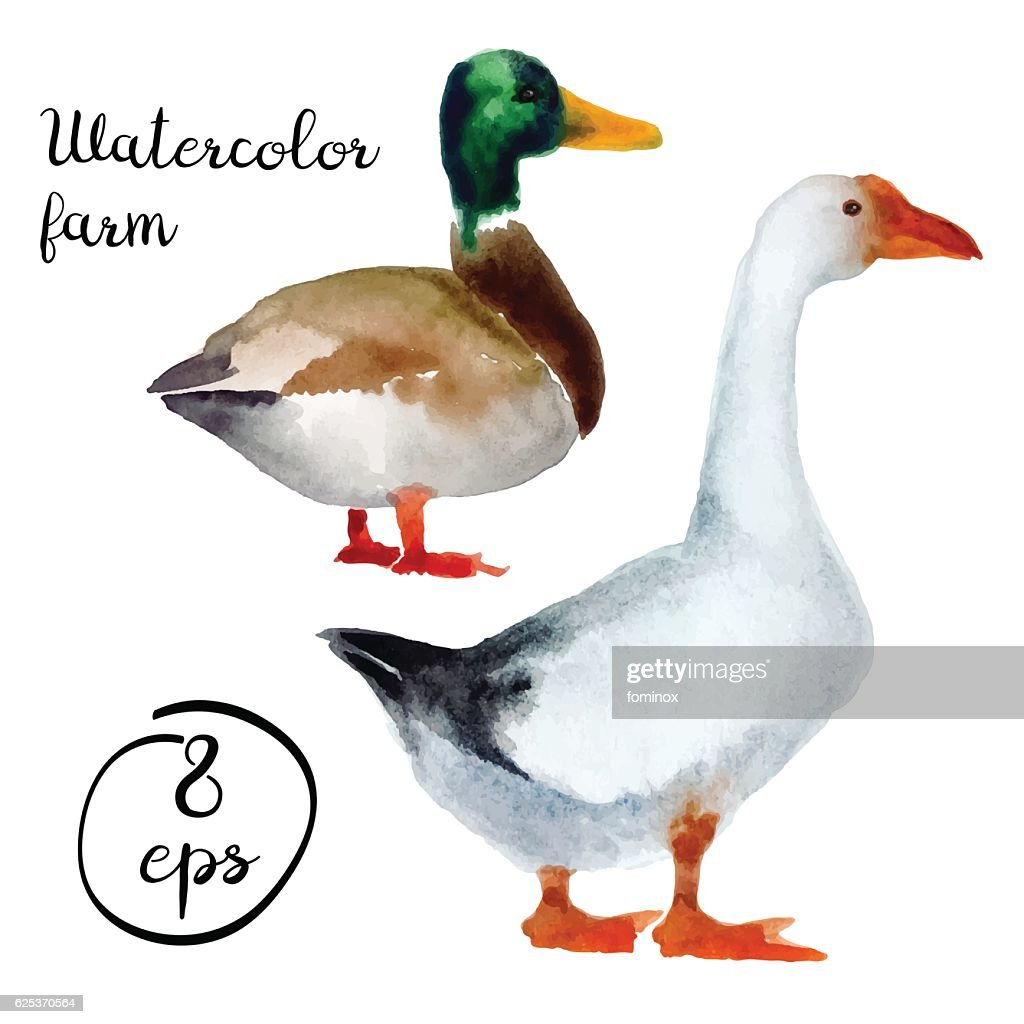 Vector farm poultry duck and goose