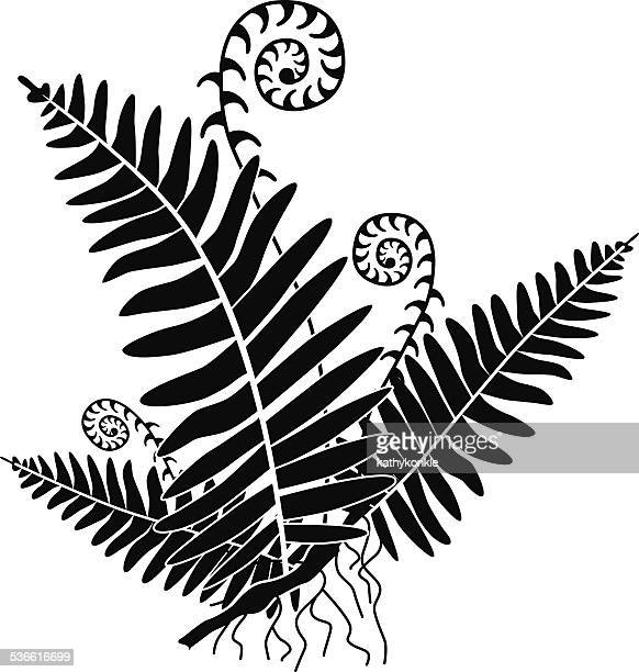 vector fern with new growth curls in black and white