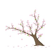 Vector flat Sakura tree isolated
