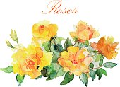 Vector floral illustration wirh watercolor roses