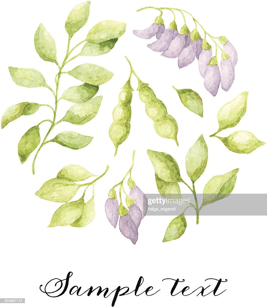 Vector Floral Watercolor Background With Violet Acacia Flowers