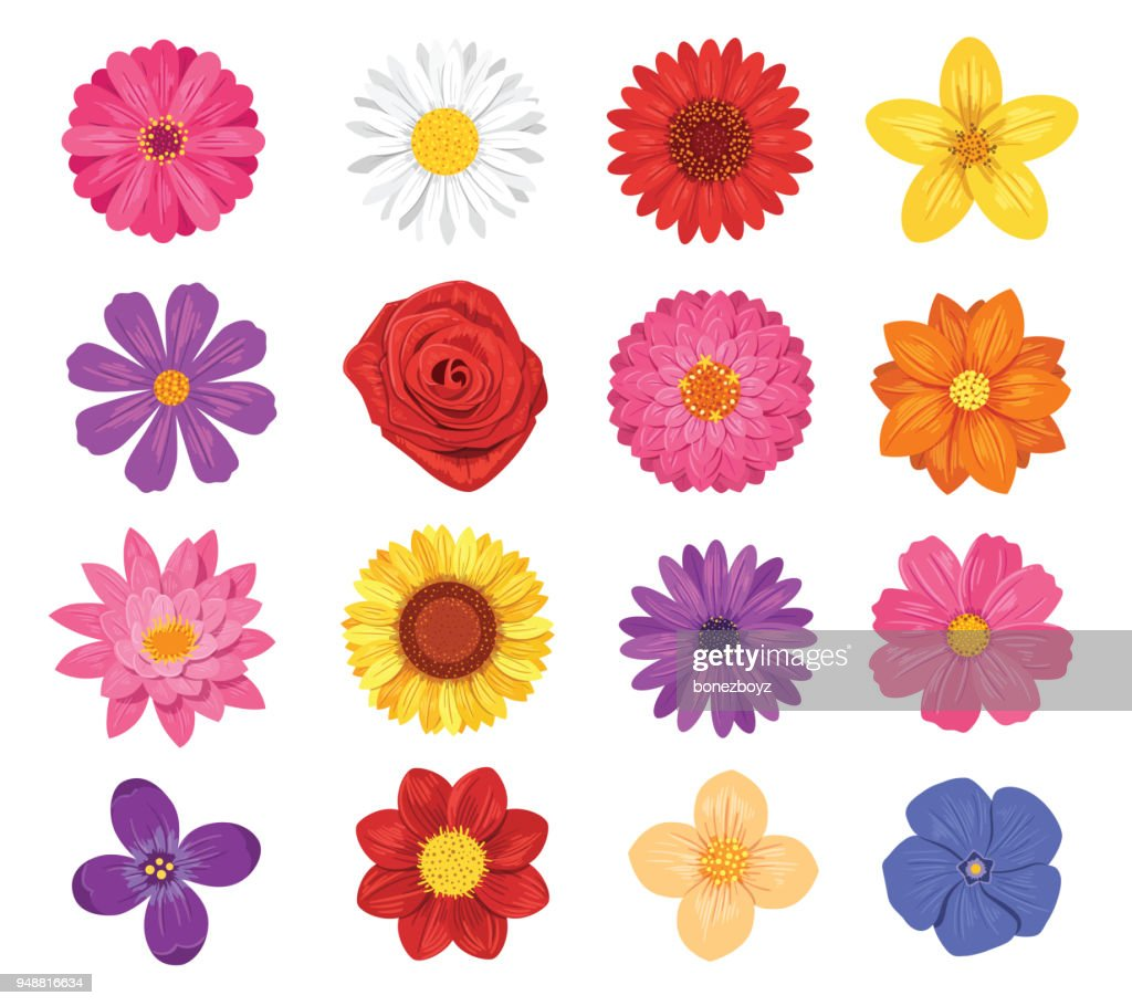 Vector flower set isolated on white background