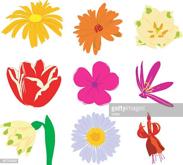 vector flowers 2 - buttercup stock illustrations, clip art, cartoons, & icons
