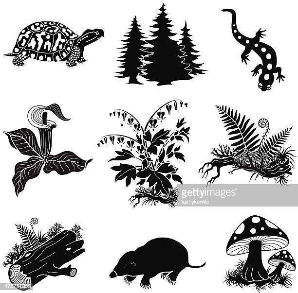 vector forest animals, plants in black and white - box turtle stock illustrations