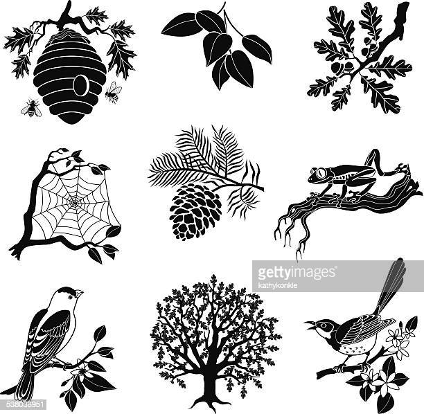 vector forest wildlife icon set in black and white - mockingbird stock illustrations, clip art, cartoons, & icons