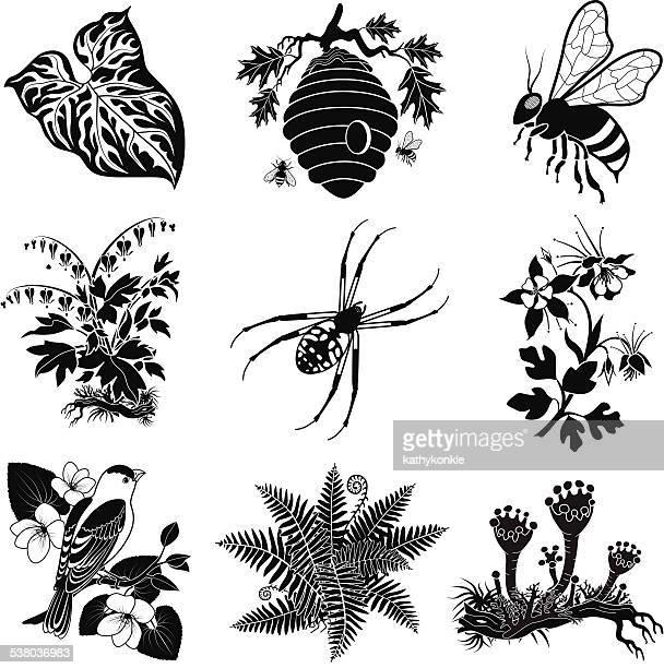 illustrations, cliparts, dessins animés et icônes de forêt sauvage illustrations vectorielles en noir et blanc - ruche