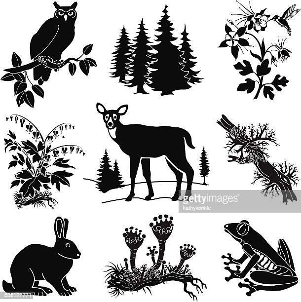 illustrations, cliparts, dessins animés et icônes de animaux de la forêt vector set en noir et blanc - biche
