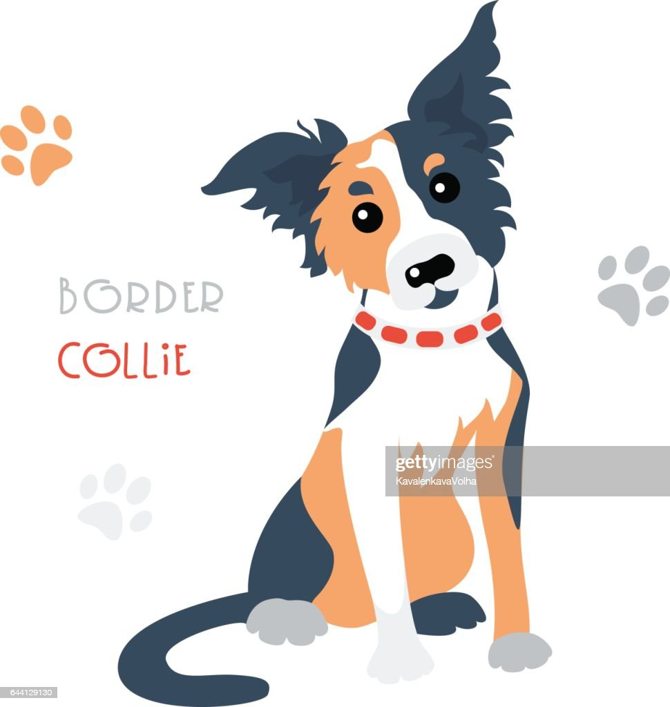 Vector funny Border Collie tricoloured dog sitting