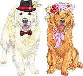 vector funny pair of dogs labrador retriever
