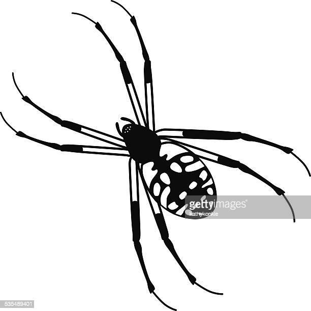 ベクトルニワオニグモ、ブラックおよびホワイト - ニワオニグモ点のイラスト素材/クリップアート素材/マンガ素材/アイコン素材