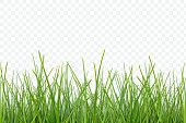 vector Grass pattern for design