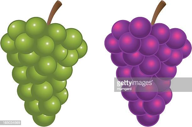 vector green and purple bunch of grapes - grape stock illustrations, clip art, cartoons, & icons