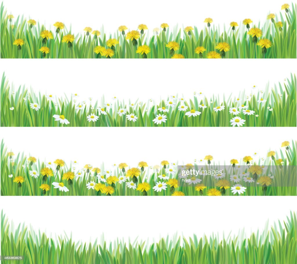 Vector green grass with chamomile and dandelions.