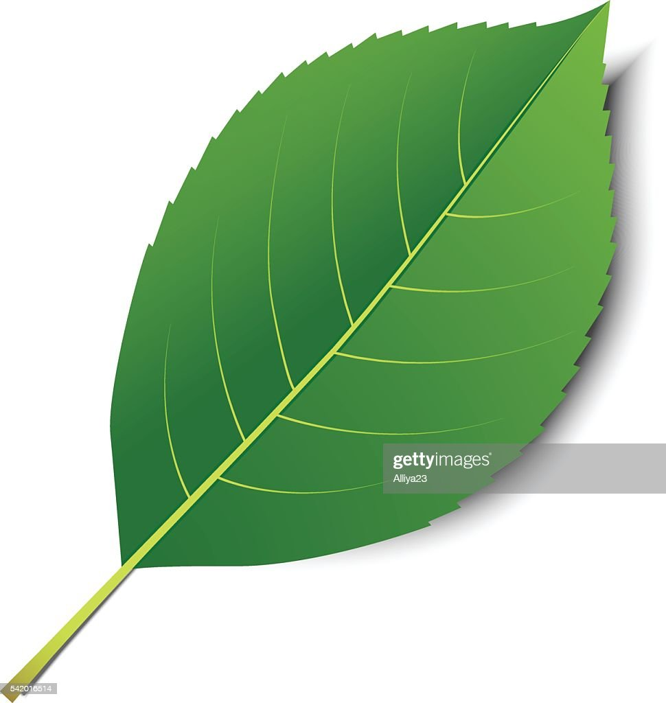 Vector green leaf