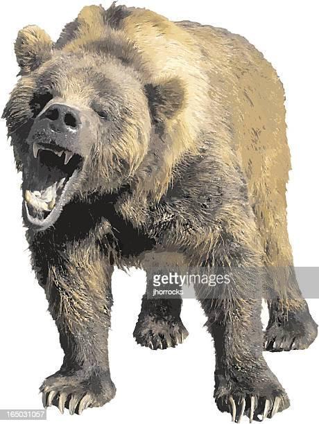 ilustraciones, imágenes clip art, dibujos animados e iconos de stock de oso de grizzly de vector - oso pardo
