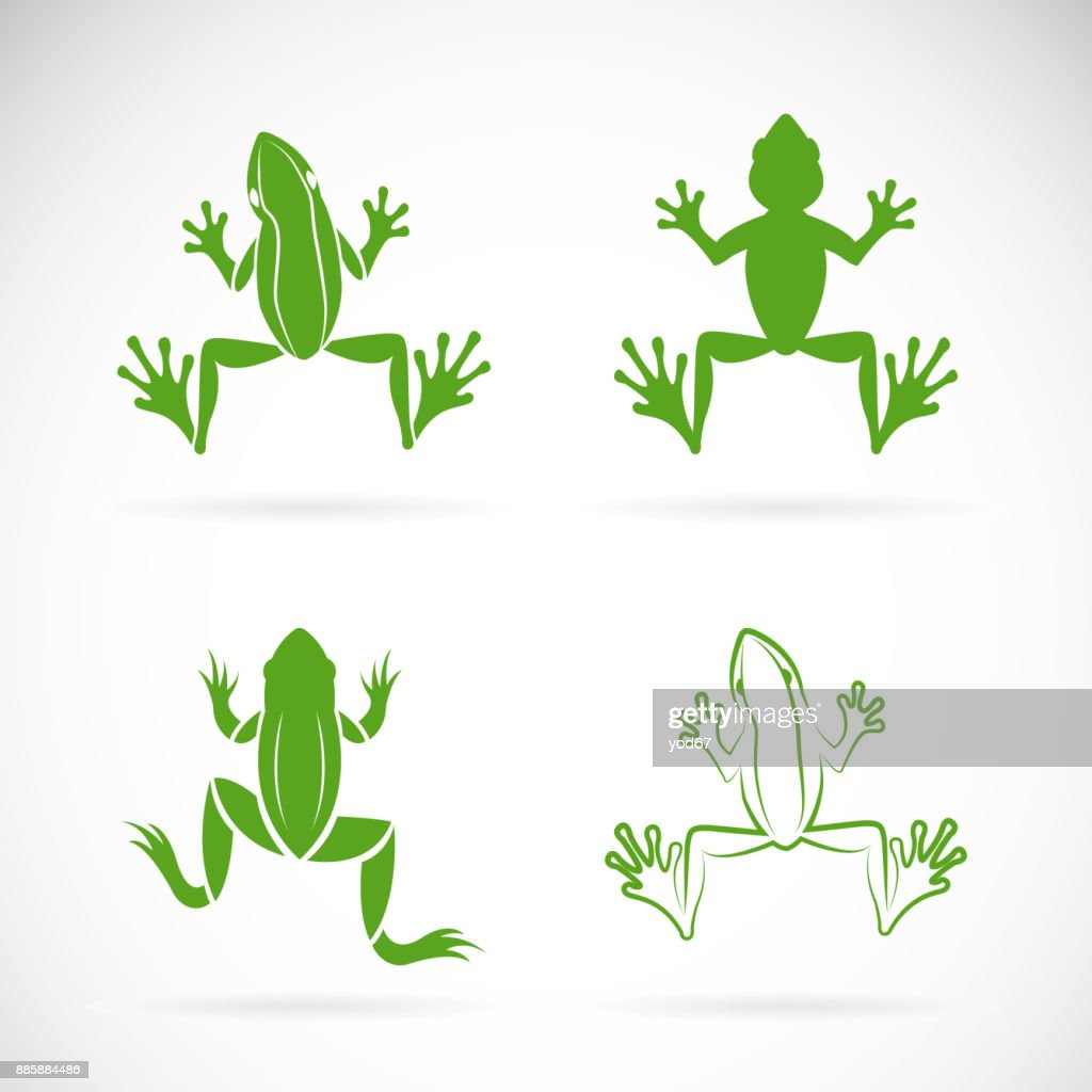 Vector group of frogs design on white background. Amphibian. Animal.