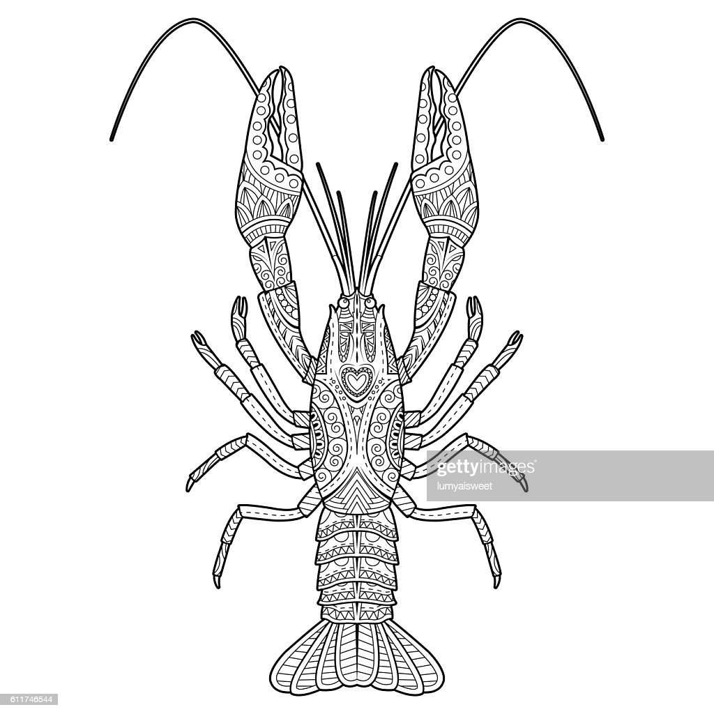 Vector hand drawn crawfish drawing for coloring book
