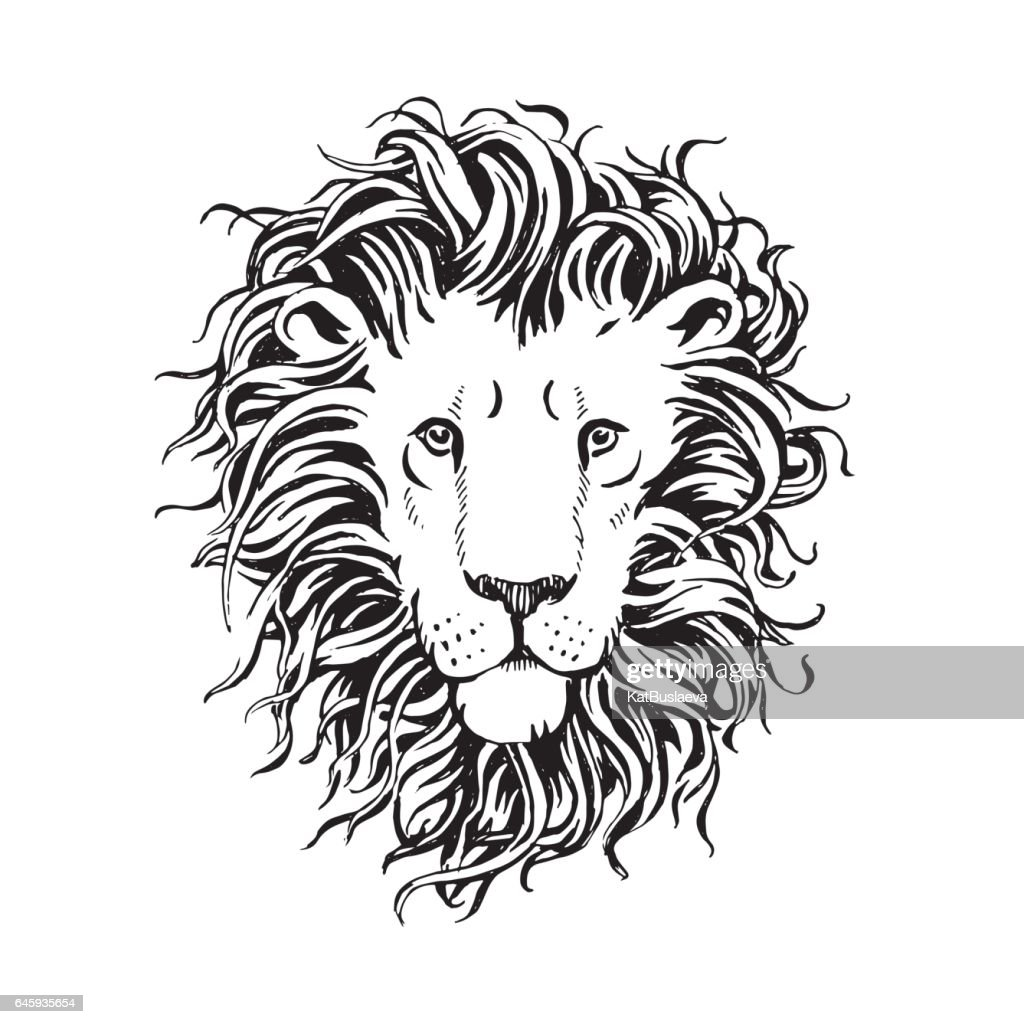 Vector hand drawn head of lion with a fluffy mane isolated on white background
