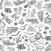 Vector hand drawn herbs and spices background or pattern illustration